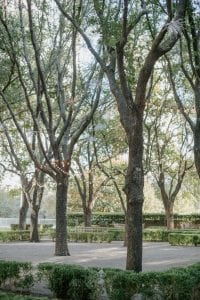 Grove of trees in the sunlight at Marie Gabrielle